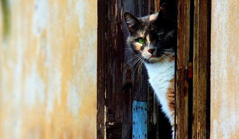 купить дверь для кошки