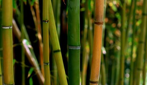 Бамбук в интерьере фото
