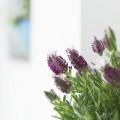 Комнатные растения в интерьере фото