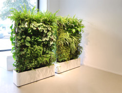 Цветы и комнатные растения в интерьере, PostRemont